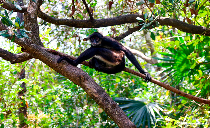 belize-lazy-monkey-mademoiselle-travel