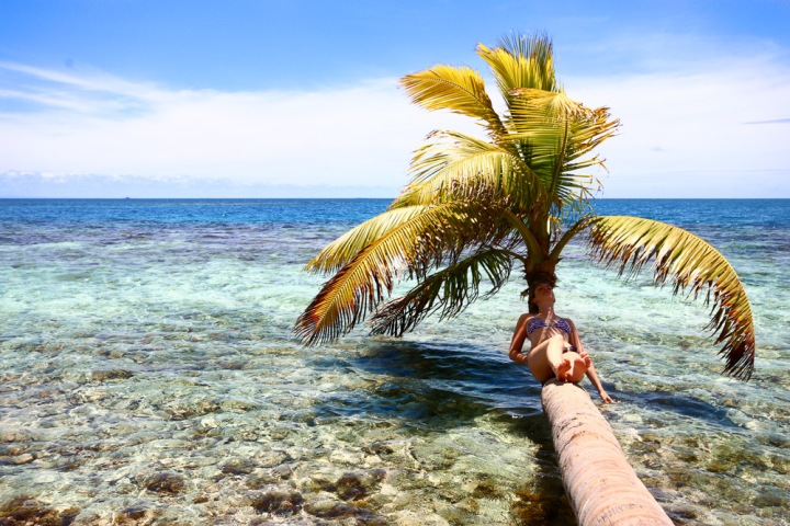 belize - silk key - nap palmtree